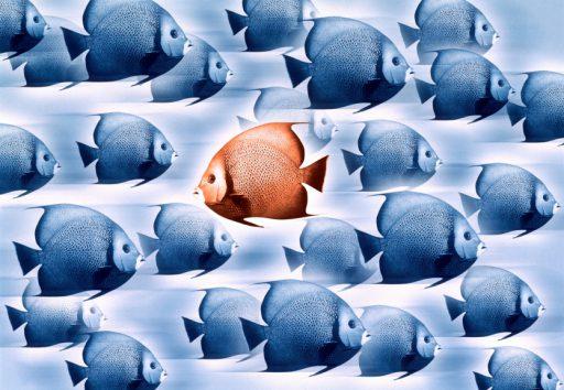 swimming against the tide radicaal transformatie tegen stroom zwemmen